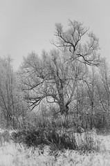 20171223-1019-IMGP2653.jpg (dcmack) Tags: water trees ontario wintertree hoarfrost elmira