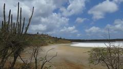 Bonaire 2018 (Valerie Hukalo) Tags: washingtonslagbaainationalpark bonaire paysbas caraïbes antilles nature hukalo valériehukalo