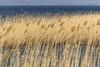 Le lac du Bouget - Savoie. (Tieph38) Tags: bourget lac savoie alpha alpes alpha68 berges pontons digues eau etangs france gallego herbe landscapes landscapephotography montagne nature naturephotography naturephotographie nuages nb sony soleil photography photographie paysages plages richard roches rochers saisons sigma roseaux tamron pose longue vagues vent