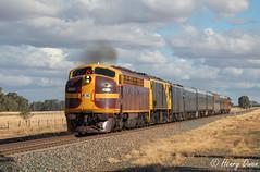 Race Track (Henry's Railway Gallery) Tags: 4204 42103 42class 421class emd diesel clyde lvr lachlanvalleyrailway passengertrain heritagetrain 8l81 abbafestival trundle stockinbingal