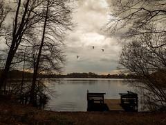Am Steg (FotoTrenz NRW) Tags: steg see nature silence landscape trees birds sky clouds idylle lake monochrome bw spiegelung lonelyness