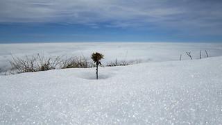 IMG_7925 fiore neve e nuvole