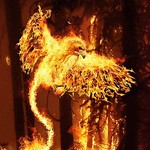Phoenix Hawk