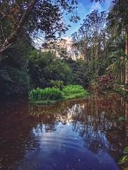 Natureza (rvcroffi) Tags: santuário forest trees sky lagoon lake céu mata floresta árvores lagoa lago