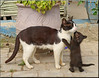 mother and child (mhobl) Tags: cat larache family morocco maroc kitten