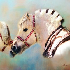 Happy Mother's Day....(Explored) (Patlees) Tags: mothersday mareandbaby textured thanks kathyrussellforhorses explored frontpage