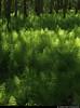 20170526_08 A shitload of horsetails (Equisetum sp.) | Hisingsparken, Gothenburg, Sweden (ratexla) Tags: 26may2017 2017 canonpowershotsx50hs gothenburg göteborg goteborg nature sweden sverige scandinavia scandinavian europe scenery scenic nordiccountries norden skandinavien beautiful earth tellus photophotospicturepicturesimageimagesfotofotonbildbilder plant plants life organism botany biology vår våren equisetum equisetumsp horsetail horsetails nonfloweringplant nonfloweringplants unlimitedphotos almostanything catchycolorsgreen