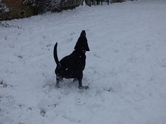Catching (Lexie's Mum) Tags: snow snowfall december2017 cold winter fun laughter dog lester coronationwalk