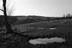 strange (analogrem) Tags: landscape tree pool puddle shadow black white bw analog film hills empty strange mood moody atmosphere reflection road field fields pasture grass sky