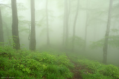 Lost in the fog (Hector Prada) Tags: forest spring fog path trees dreamy enchanted bosque primavera niebla camino árbol encantado urbasa atmósfera mood nature naturaleza paísvasco basquecountry