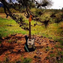 Seeking Shade (Pennan_Brae) Tags: musicphotography music guitarphotography guitars guitar guitarporn sixstring offsetguitars fenderjapan fendermustang electricguitars fenderguitars fenderguitar guitarist electricguitar fender