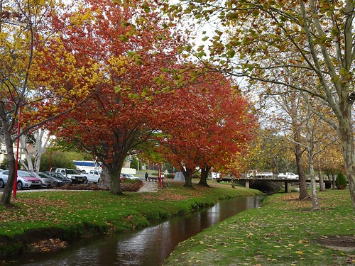 Tumbarumba New South Wales. Autumn trees by denisbin, on Flickr