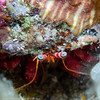 Eye Of The Crab (Kit Sidlow) Tags: crab hermit eye eyes shell legs macro underwater underwaterphotography nature natural wildlife scuba diving ibiza mediterranean sea marine spain