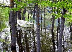 The Water Forest (C-Aida) Tags: forest nature trees boat may water reflection zen humor meditation adventure tao earth world europe spring landscape travel
