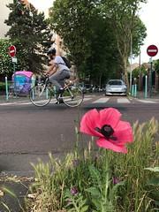 Fleurs de rue : sens interdit(s) (Christophe Rose) Tags: flores roadsign idf isd france seinesaintdenis cyclist cycliste bicycle signalisation panneaux vélo rue street flower fleur lîlesaintdenis
