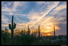 Arizona Sunset (Ken Mickel) Tags: arizona cacti cactus clouds cloudy desert estrellla goodyeararizona kenmickelphotography landscape landscapedesert outdoors plants saguaro sunsets backlighting backlit nature photography goodyear unitedstates us sky
