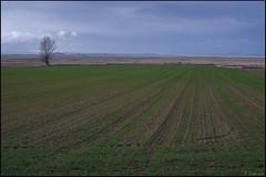 Solitario en la llanura. (antoniocamero21) Tags: color foto sony árbol solitario atardecer aragón teruel bello llanura