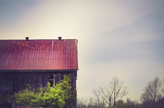 tin roof rusted (shane holsclaw) Tags: barn tin roof spring rust lexington kentucky