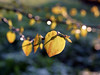 Schönen Start ins Wochenende! (ingrid eulenfan) Tags: natur nature frühling gegenlicht blätter licht light sony alpha 6000 sonydt35mmf1 35mm natural