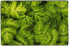 Forest Foliage...... (Kevin Povenz Thanks for all the views and comments) Tags: 2018 may kevinpovenz westmichigan michigan ottawa ottawacounty ottawacountyparks hagerpark foliage groundcover forest woods green nature outdoors outside canon7dmarkii sigma24105art leaves plants weeds pattern