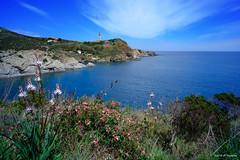 Cap Béar (jpto_55) Tags: cap capbéar méditerranée fleur roussillon pyrénéesorientales france xe1 fuji fujifilm voigtlander15mmf45superwideheliarii voigtlanderlens