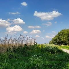 Broekpolder in Vlaardingen (Geertje Anja) Tags: vlaardingen broekpolder walking spring lente wolkenlucht clouds holland zuidholland fluitekruid cowparsley