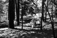 Campsite (bhop) Tags: table mountain campground camping angeles forest camp wilderness nationalforest nature solocamping california bw blackandwhite monochrome leica m6 leicam6 rangefinder canon 50mm f14 screwmount kodak kodakfilm film trix kodaktrix v700 diy filmcamera shootfilm tent campsite