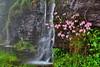 Pink Shell Azalea (Rusty4344) Tags: flowers azalea pink rocks water blueridgeparkway outdoors outdoor trees green