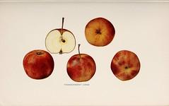 n442_w1150 (BioDivLibrary) Tags: apples fruitculture newyorkstate libraryofcongress bhl:page=43018956 dc:identifier=httpsbiodiversitylibraryorgpage43018956 cornellcider