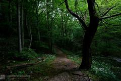 Valle Rio Freddo, la serenità del camminare (EmozionInUnClick - l'Avventuriero photographer) Tags: bosco faggeta luci montecucco primavera sentiero tronco valleriofreddo sonya7riii tracieloeterra
