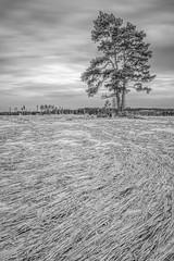 lonely tree (sami kuosmanen) Tags: kouvola kuusankoski taivas tree talvi finland field luonto landscape lumi nature north europe black valo suomi sky snow