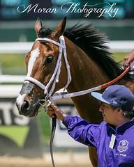 Mar Vista Miguel (EASY GOER) Tags: belmontpark horseracing equine thoroughbred horses racing horse