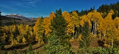 Fall Colors in Wyoming (The VIKINGS are Coming!) Tags: wyoming autumn colors hunting deer elk grizzly bare wolf nakedbeauty highcountry