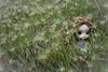 Heaven on earth (Erla Morgan) Tags: doll dal dallizbel lizbel carlota erlamorgan birthday groove junplanning wig obitsu pullip green nature heaven