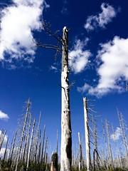 Hiking the PCT (pete4ducks) Tags: on1pics 2015 oregon pct blue clouds pacificcresttrail hiking nature 500views