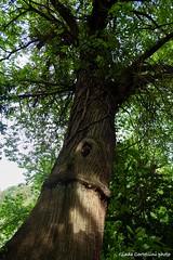 (Giada Cortellini) Tags: tree trees albero albri wood forest treelovers treehugger green canon canonitalia nature naturephotography natura naturepicture verde foresta bosco
