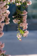 DSC03534-Lr (slam.photo) Tags: paris spring printemps