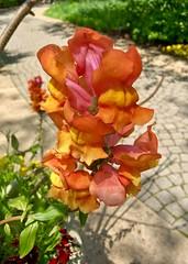 Olbrich Botanical Gardens (JBDPICS1) Tags: madisonwisconsin olbrichbotanicalgardens nature
