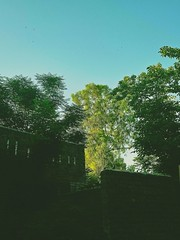 Hello says the sun. (Somersaulting Giraffe) Tags: outdoor tree morning ngc nature leaves cold peace sun dublin sky
