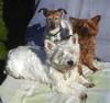 Sunbathers (Durley Beachbum) Tags: odc dogs sunbathing