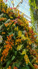 20180324_123550 (jaglazier) Tags: 2018 32418 bamboo botanicalgardens bronx copyright2018jamesaferguson greenhouses march newyork newyorkbotanicalgarden newyorkcity orange orchidshow orchidaceae usa art crafts flowers gardens orchids parks plants sculpture white yellow bronxcounty unitedstates