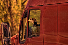 Get Out And Look (raymondclarkeimages) Tags: rci raymondclarkeimages 8one8studios usa canon outdoor google flickr 6d 70200mm smugmug yahoo dog animal truck window pet goal mirror