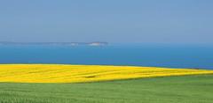 Landschaft (Wunderlich, Olga) Tags: raps kaparkona rügen insel mecklenburgvorpommern blau ostsee feld getreide getreidefeld rapsfeld landschaft natur