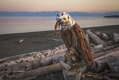 Bald Eagle - Driftwood Art - Esquimalt Lagoon, Vancouver Island, BC (Freshairphotography) Tags: driftwood naturesart esquimaltlagoon esquimalt greatervictoria vancouverisland beautifulbc beach beachart coast ocean pacificocean tourism victoria westcoast