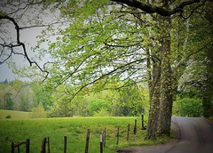 ~ Just around the bend ...... ( Explored ) (~ Cindy~) Tags: cadescove springgreen aroundthebend tennessee 2017 explored frontpage 49
