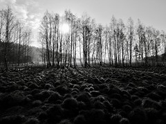 Everything In Its Right Place (docwiththecamera) Tags: bw tree sun field morning sunrise shape harmony mist