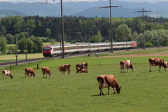 18_05_09 AllmendiII (95) (chrchr_75) Tags: christoph hurni schweiz suisse switzerland svizzera suissa swiss chrchr chrchr75 chrigu chriguhurni chriguhurnibluemailch albumzzz201805mai mai 2018 albumbahnenderschweiz albumbahnenderschweiz20180106schweizer bahnen bahn eisenbahn train treno zug juna zoug trainen tog tren поезд lokomotive паровоз locomotora lok lokomotiv locomotief locomotiva locomotive railway rautatie chemin de fer ferrovia 鉄道 spoorweg железнодорожный centralstation ferroviaria