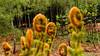 """-The triffids have come to Birnam Hill! Help!"" (grahamrobb888) Tags: nikon nikond800 d800 nikkor nikkor20mmf18 scotland birnamwood perthshire woods woodland"