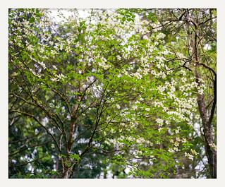 spring fever dream