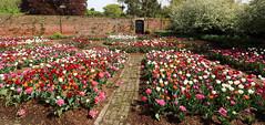 Eltham Palace (AnthonyR2010) Tags: elthampalace eltham palace london greenwich englishheritage tulips